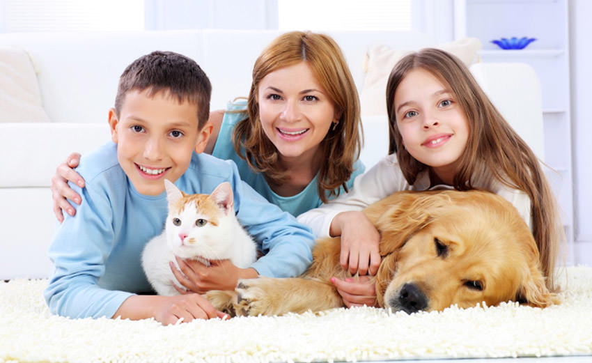 Pet stain, odor control