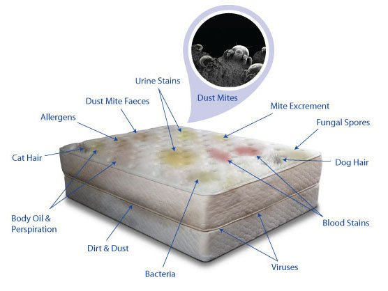 Residential mattress cleaning in san francisco