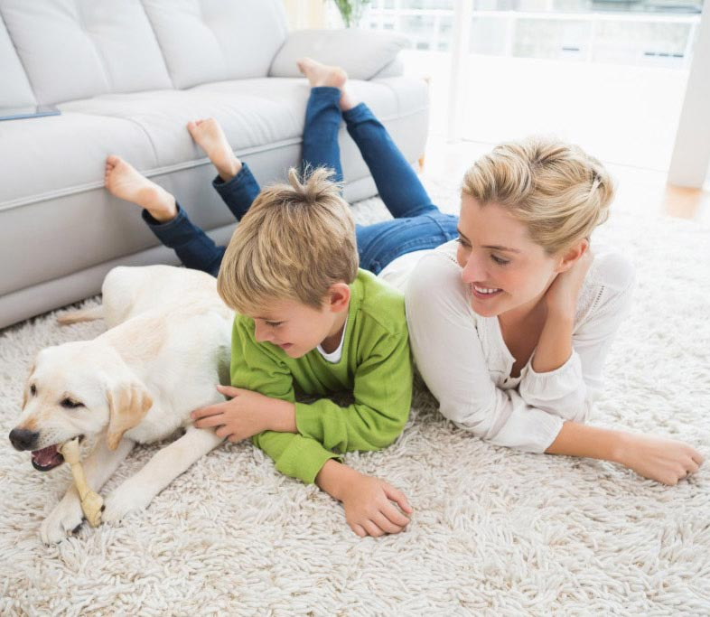 Residential Pet stain carpet cleaning in san francisco